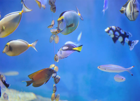 [2]竹島水族館